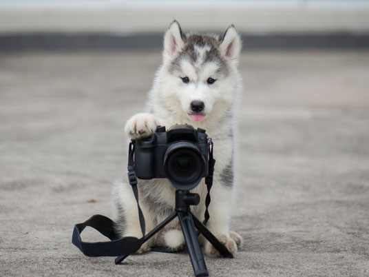 Photo animalière